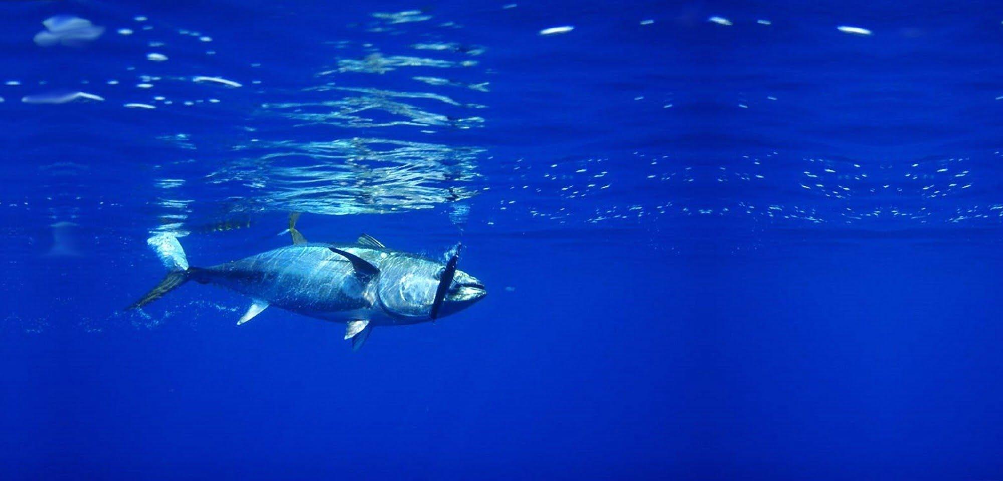 Sustainable Tuna